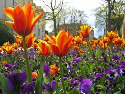 Lean Into Spring